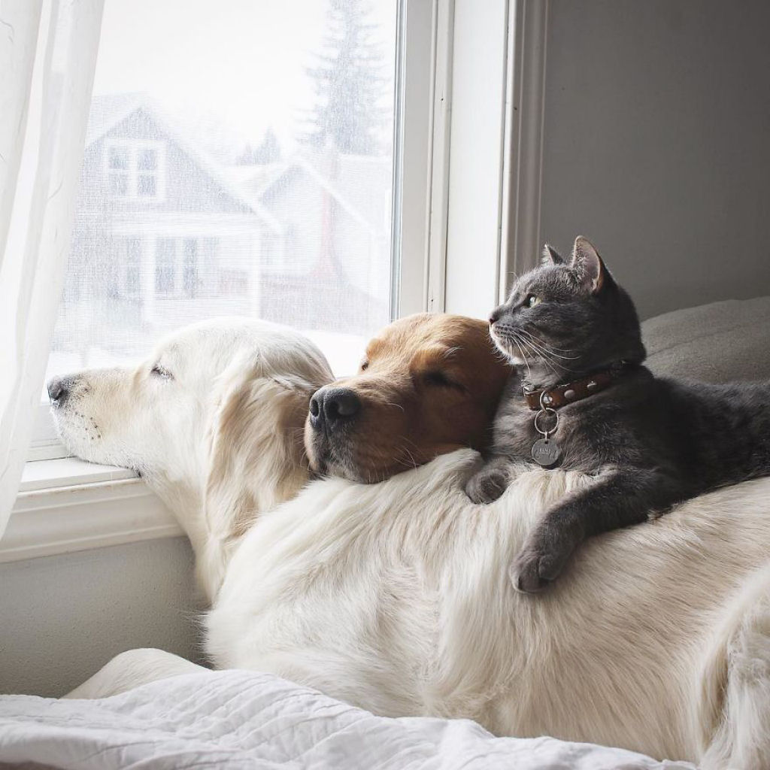 01 2 cani e 1 gatto che amano fare tutto insieme