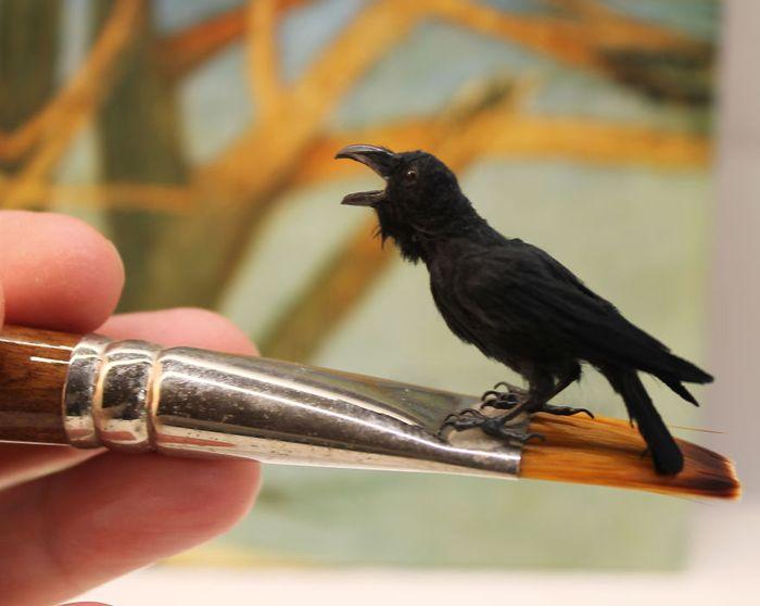 Katie-Doka-crea-uccelli-in miniatura-con-una-fedeltà-nei-particolari-impressionante