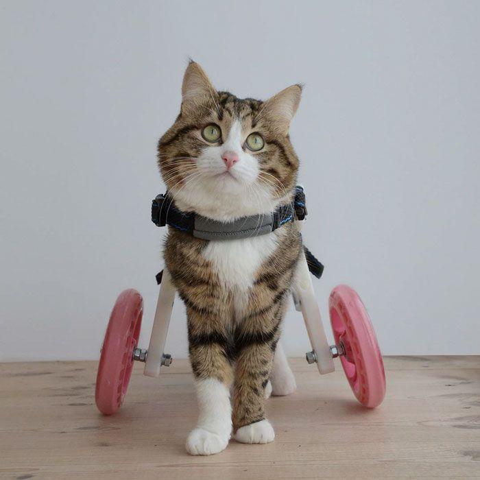 01 questo gatto nonostante il suo problema sta spopolando su Internet