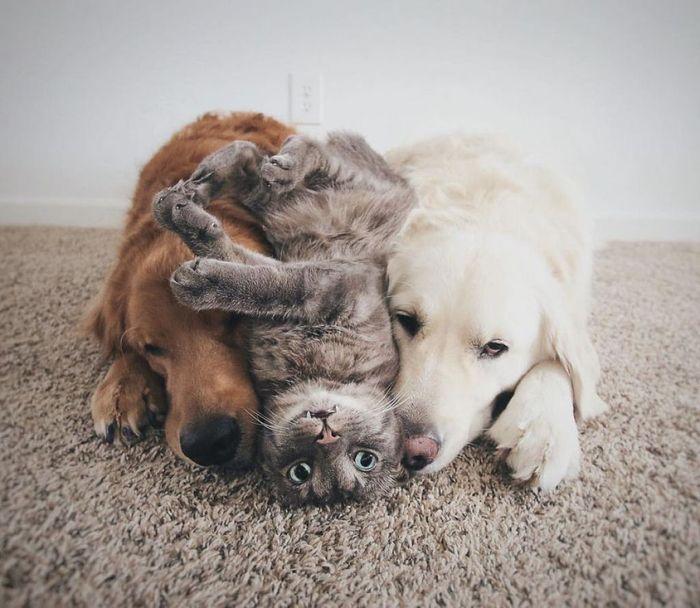 02 2 cani e 1 gatto che amano fare tutto insieme