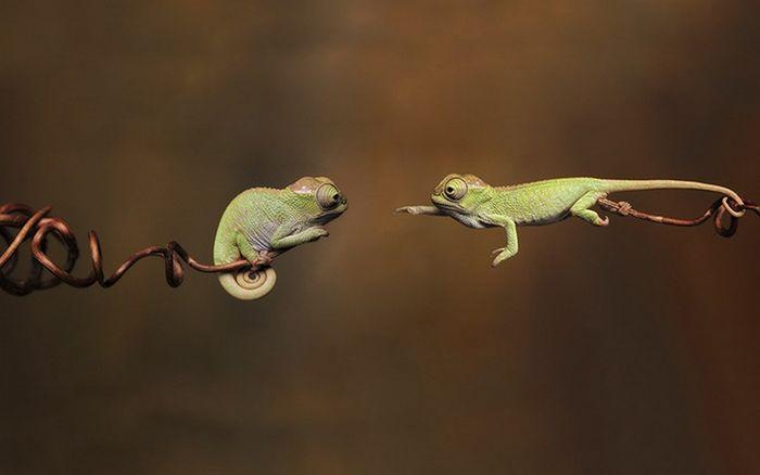 02 camaleonti piccolissimi