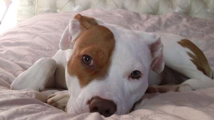 02 cane cieco abbandonato per cinque volte trova finalmente casa