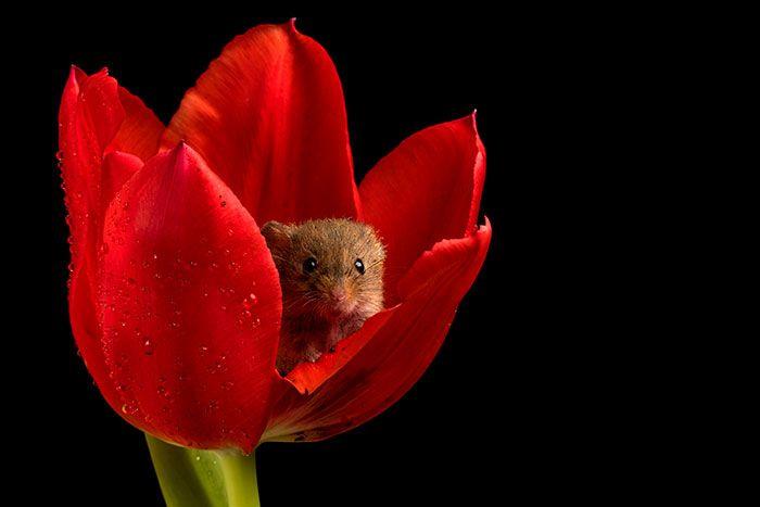 02 foto di topolini