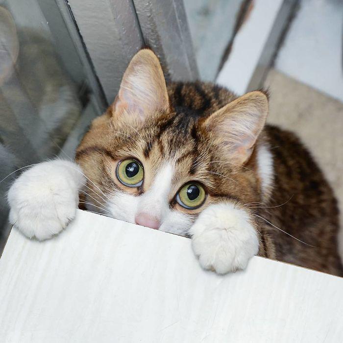 02 questo gatto nonostante il suo problema sta spopolando su Internet