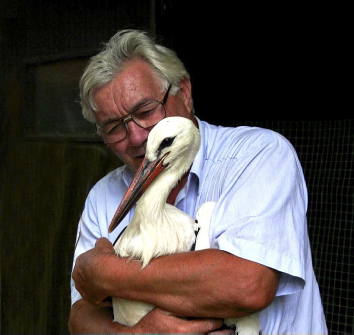02 una cicogna maschio torna dalla sua compagna disabile