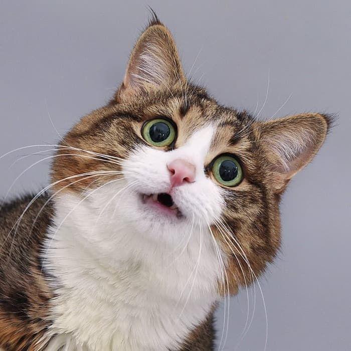 03 Gatto disabile
