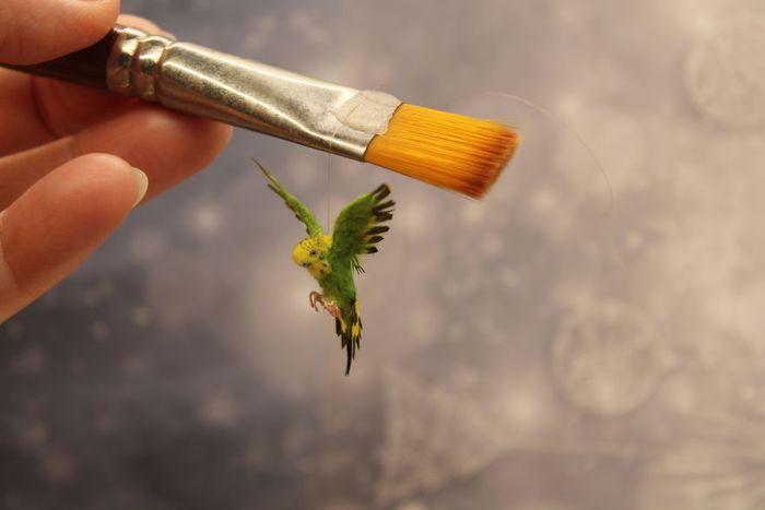 03 Katie Doka crea uccelli in miniatura con una fedeltà nei particolari impressionante