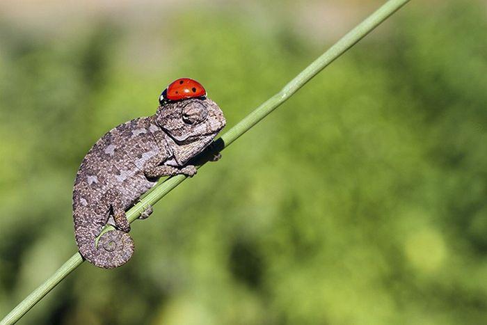 03 camaleonti piccolissimi