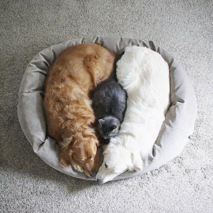 04 2 cani e 1 gatto che amano fare tutto insieme