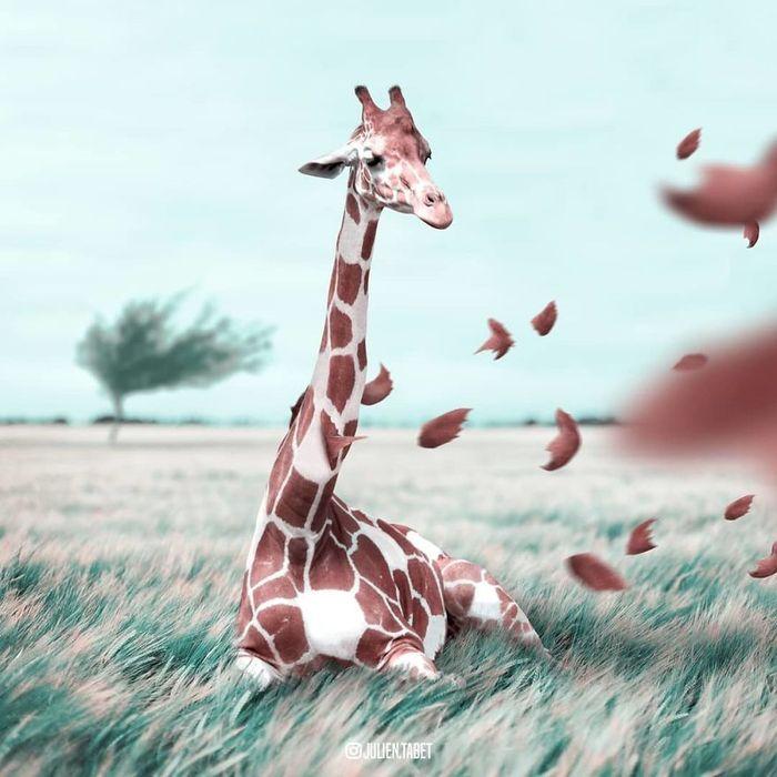 04 animali fantastici creati con photoshop