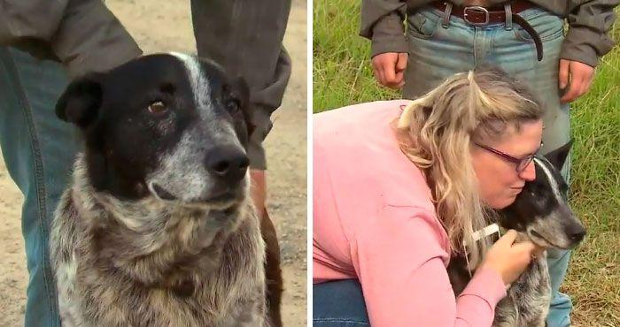 04 cane protegge una bambina per 15 ore dalle intemperie