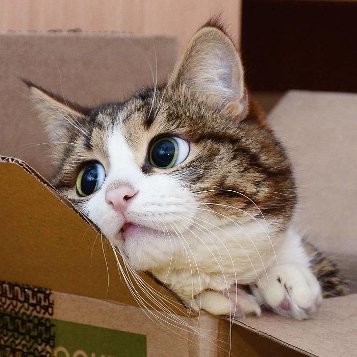 04 questo gatto nonostante il suo problema sta spopolando su Internet