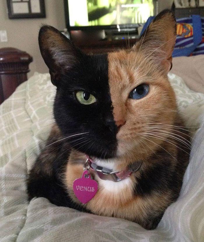 04 un affascinante felino con il volto davvero raro