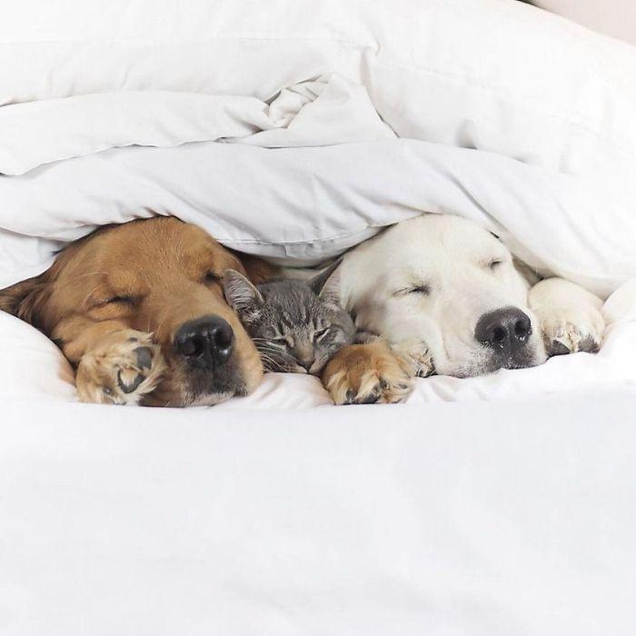 05 2 cani e 1 gatto che amano fare tutto insieme