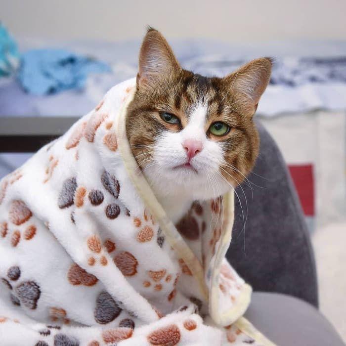 05 Gatto disabile