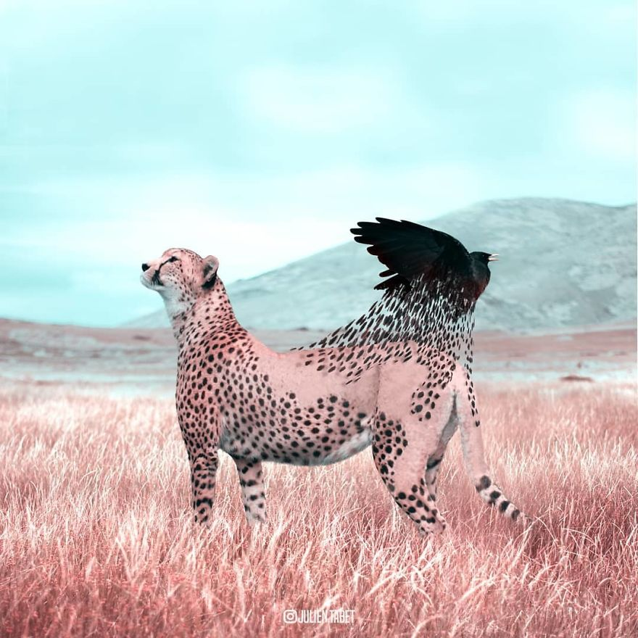 05 animali fantastici creati con photoshop