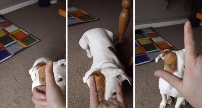 05 cane cieco abbandonato per cinque volte trova finalmente casa