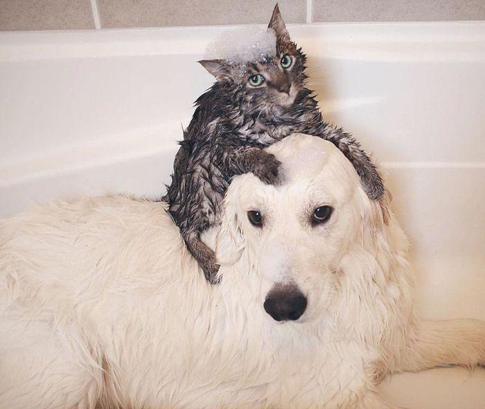 06 2 cani e 1 gatto che amano fare tutto insieme