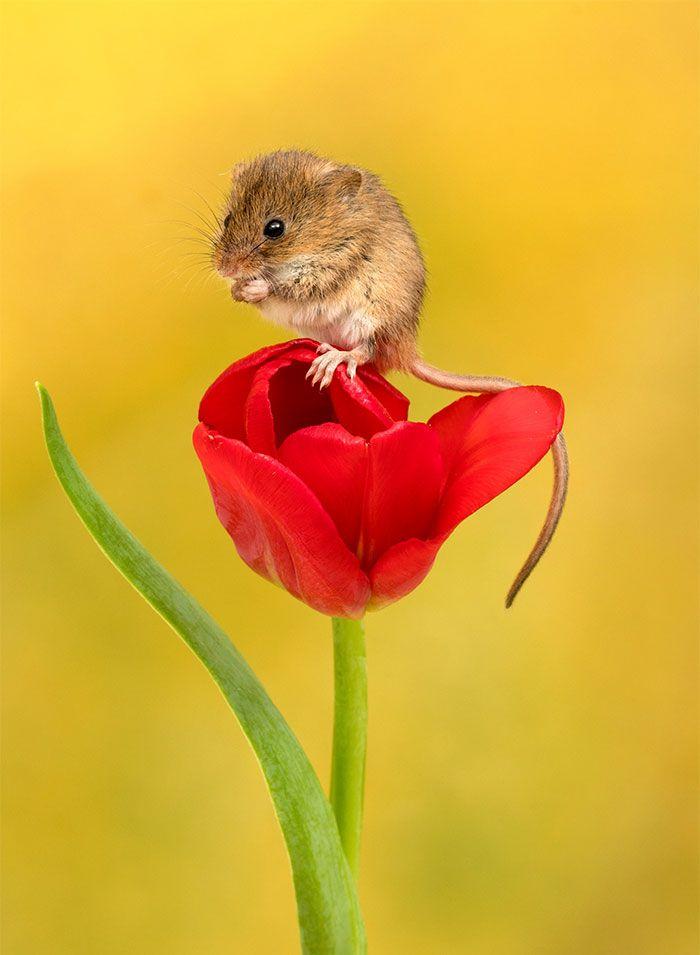 06 foto di topolini