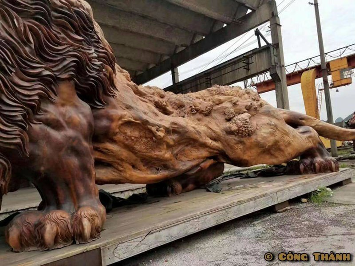 06 leone intagliato nel legno più lungo al mondo