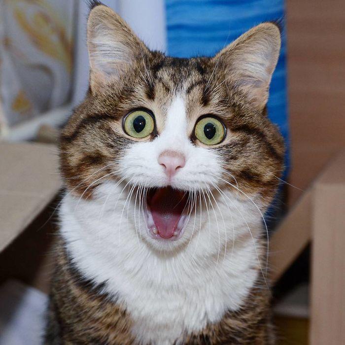 06 questo gatto nonostante il suo problema sta spopolando su Internet