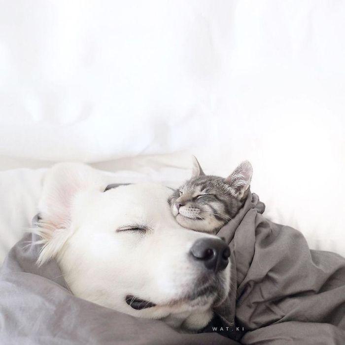07 2 cani e 1 gatto che amano fare tutto insieme