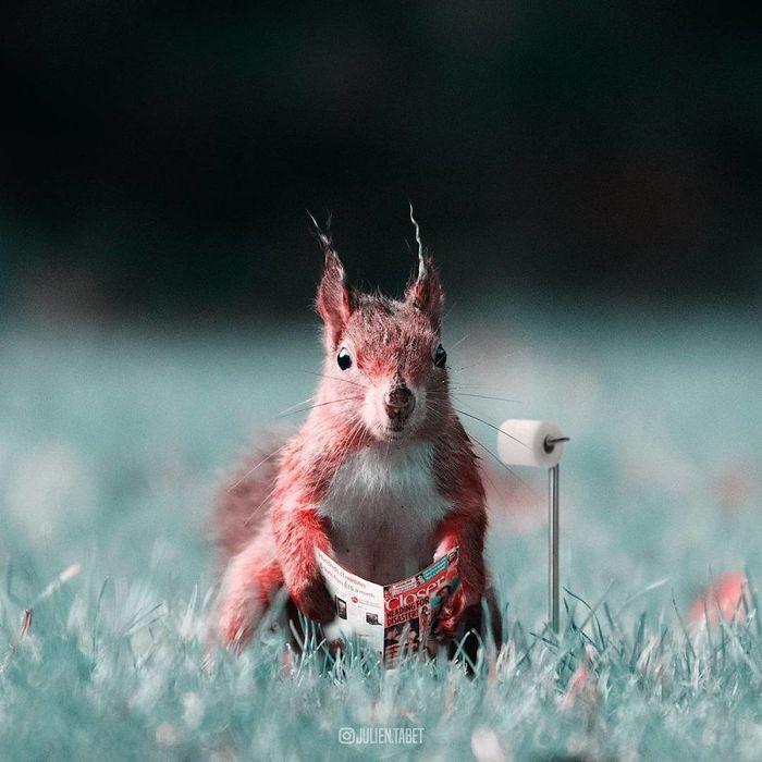 07 animali fantastici creati con photoshop