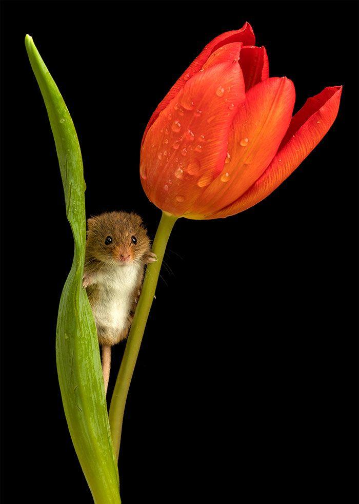 07 foto di topolini