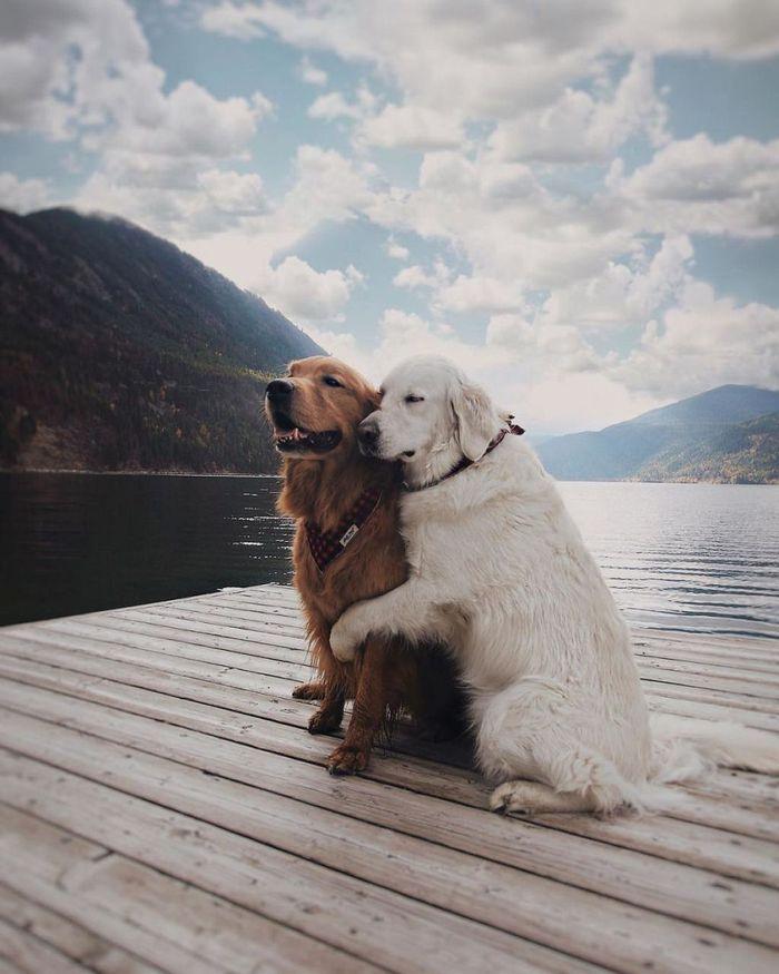 08 2 cani e 1 gatto che amano fare tutto insieme