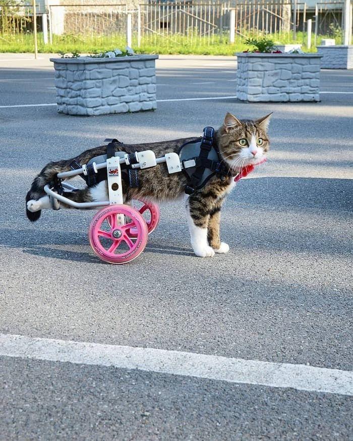 Rexie il Gatto disabile