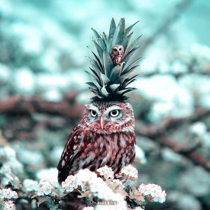 08 animali fantastici creati con photoshop