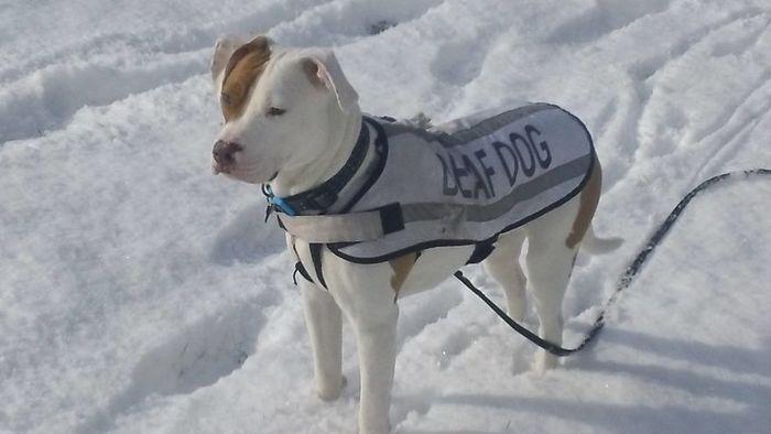 08 cane cieco abbandonato per cinque volte trova finalmente casa