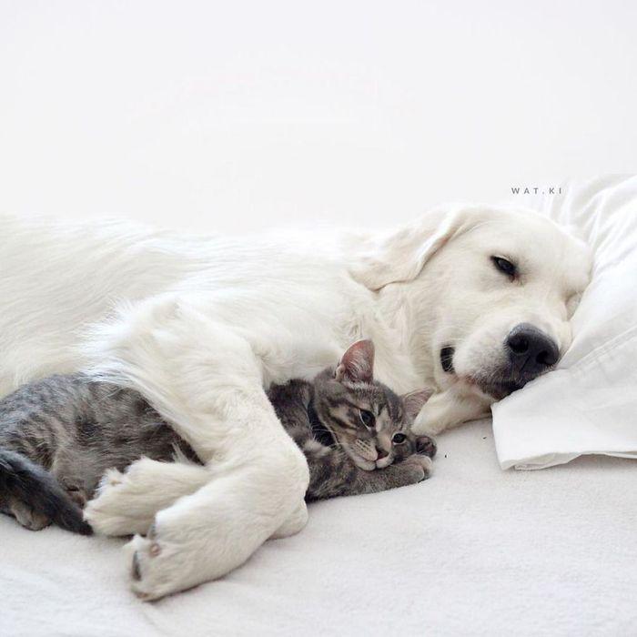 09 2 cani e 1 gatto che amano fare tutto insieme