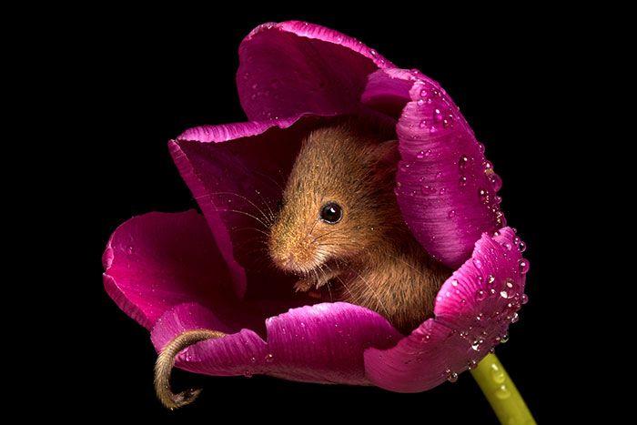 09 foto di topolini