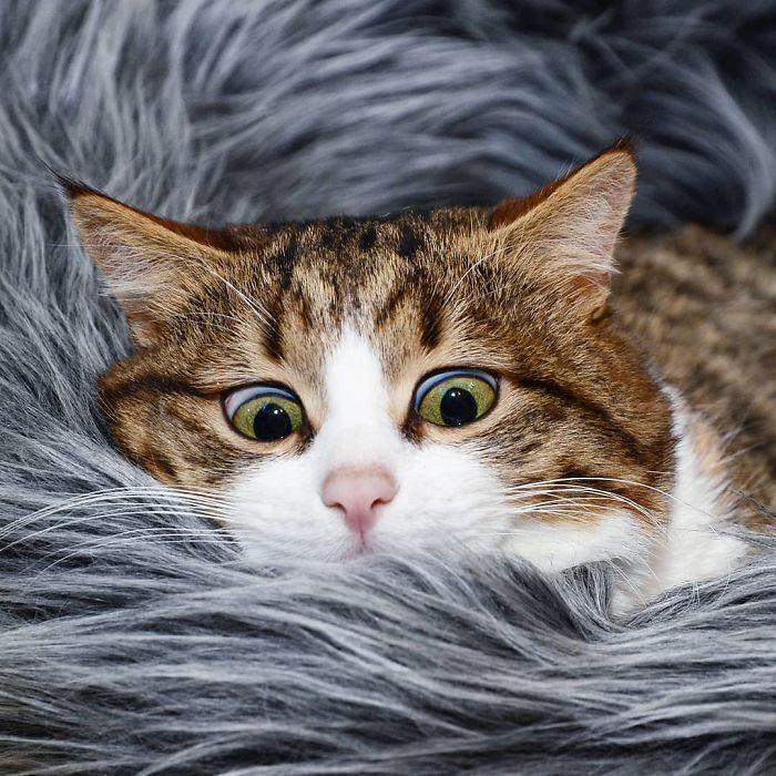 09 questo gatto nonostante il suo problema sta spopolando su Internet