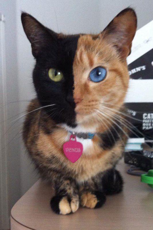 09 un affascinante felino con il volto davvero raro