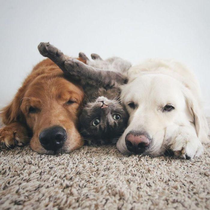 10 2 cani e 1 gatto che amano fare tutto insieme