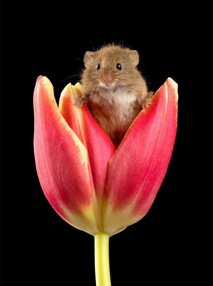 10 foto di topolini