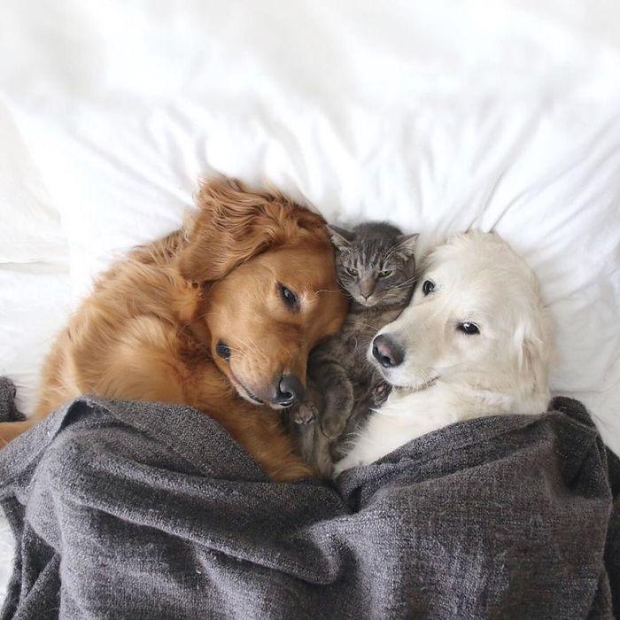 11 2 cani e 1 gatto che amano fare tutto insieme