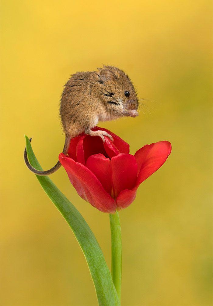 11 foto di topolini