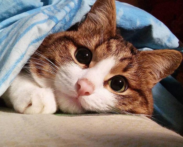 11 questo gatto nonostante il suo problema sta spopolando su Internet