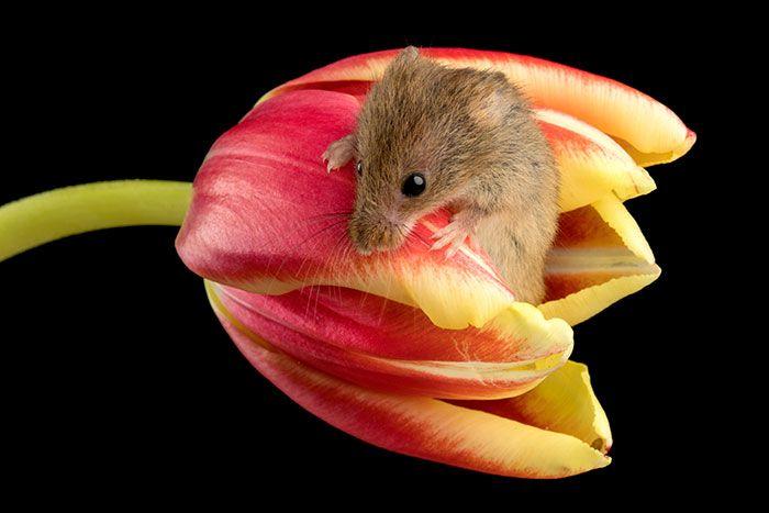12 foto di topolini