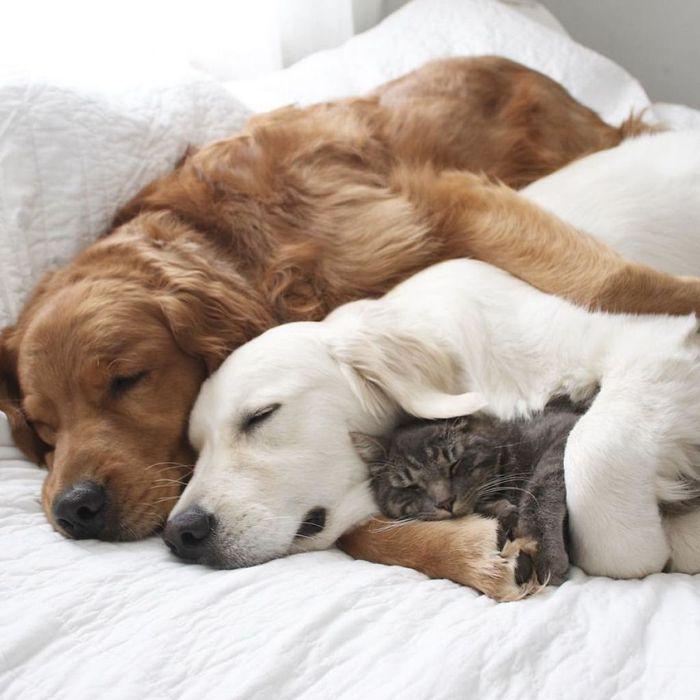13 2 cani e 1 gatto che amano fare tutto insieme