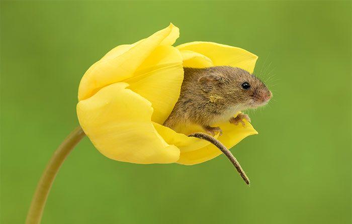 13 foto di topolini