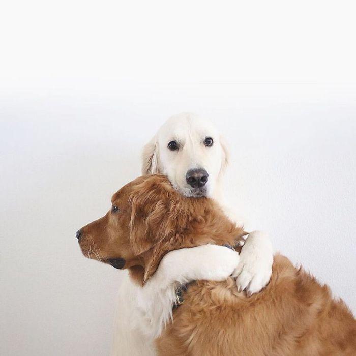 14 2 cani e 1 gatto che amano fare tutto insieme