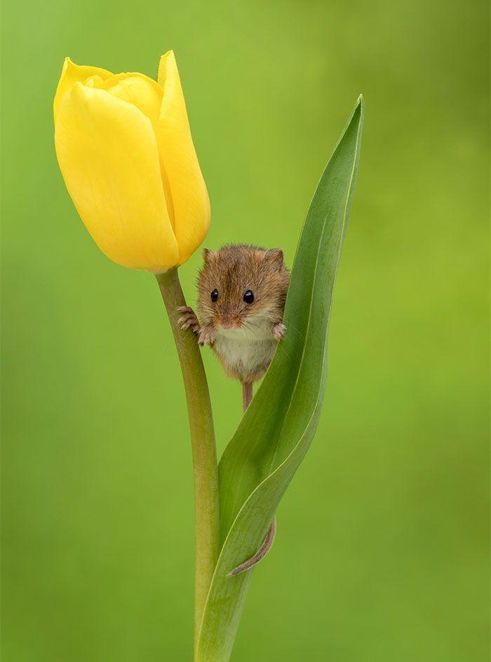 14 foto di topolini