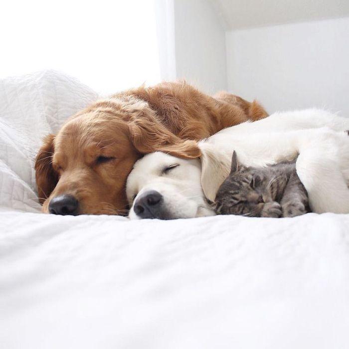 16 2 cani e 1 gatto che amano fare tutto insieme