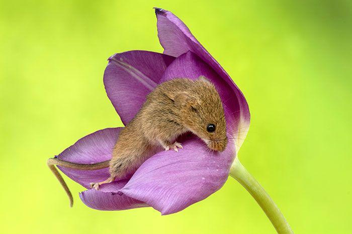 19 foto di topolini