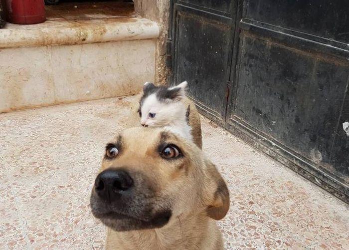 01 Da Aleppo una storia commovente tra un gattino e un cane