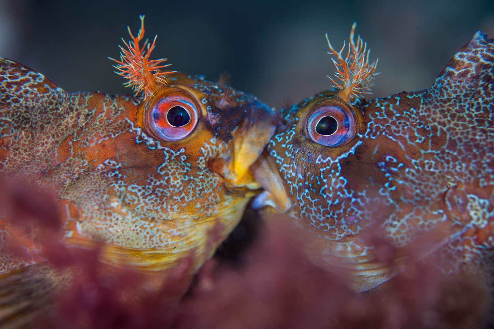 01 Gli scatti più belli dell' Underwater Photographer of the Year 2018